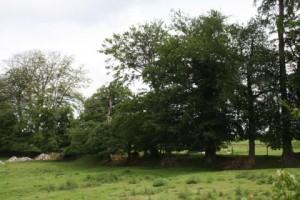 Élément du paysage jouant un rôle hydraulique important : le talus planté